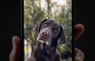 Új iPhone 7 Plus reklámokat adott ki az Apple